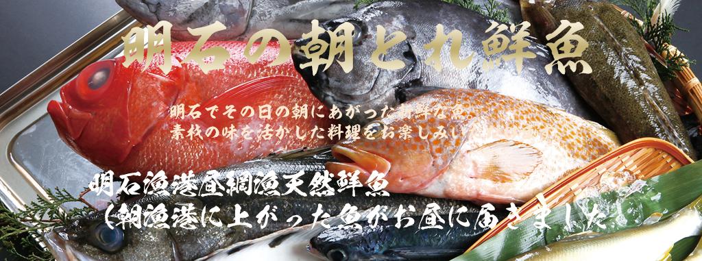 明石の朝とれ鮮魚